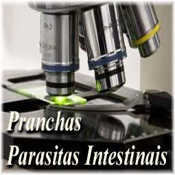 Protegido: Pranchas para o Diagnóstico de Parasitas Intestinais